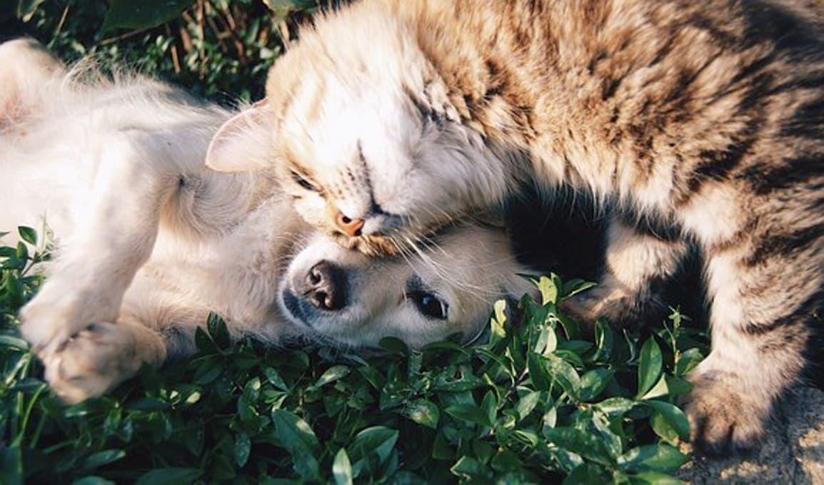 7 hacks pour protéger votre maison de vos animaux domestiques